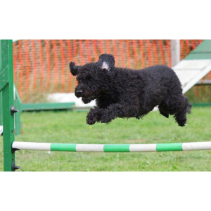 Dublin SPCA Agility Taster workshop