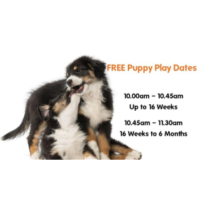 Puppy Play Dates